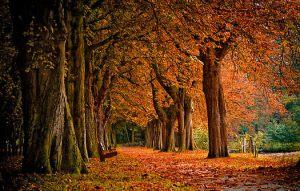 september trees