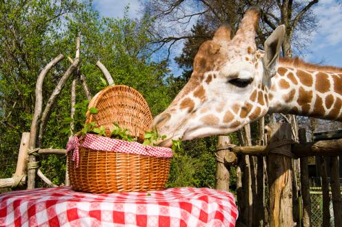 picnic zoo